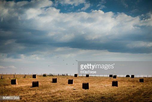 Bales of hay in field under cloudy sky : Foto de stock