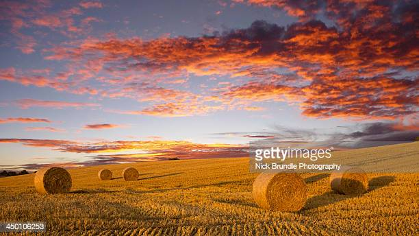 Bales of Summer