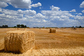 Bales of wheat straw with farm buildings beyond