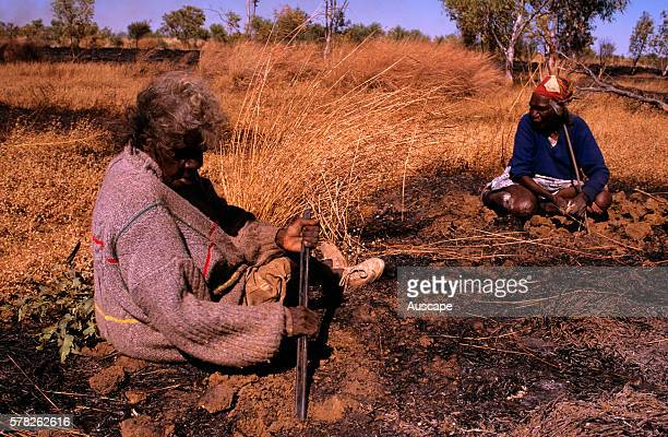Balgo women hunting waterholding frogs using digging sticks Balwina Aboriginal Lands southeast Kimberley region Western Australia Australia