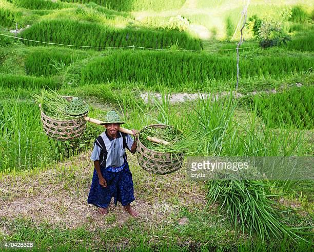 Balinese farmer carrying yoke