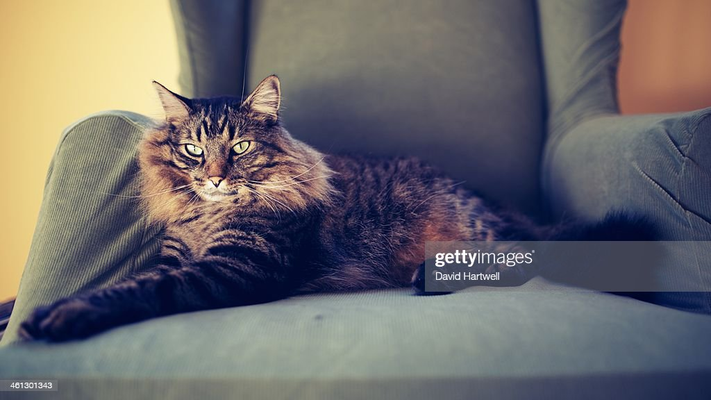 Ball of Hair In A Chair : Stock Photo