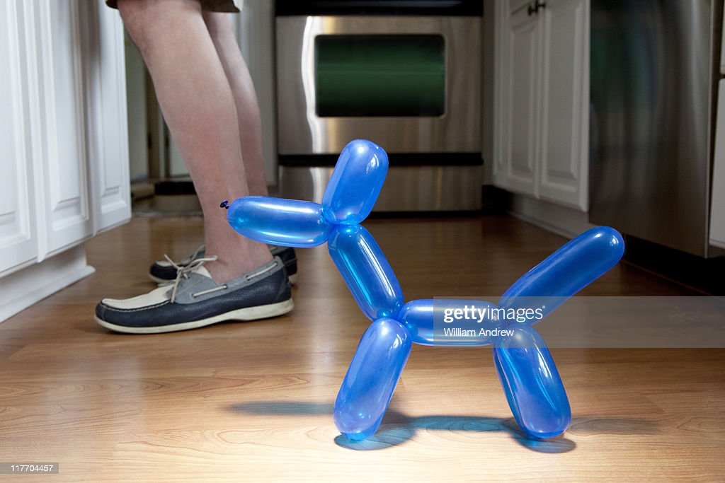 Ballon dog begging near owner's legs : Stock Photo