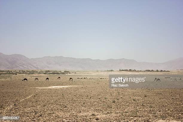 Balochistan landscape