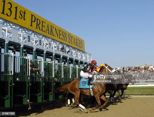 Horses leave the starting gate during the 131st Preakness Stakes at Pimlico Race Course in Baltimore Maryland 20 May 2006 Bernardini won the race the...