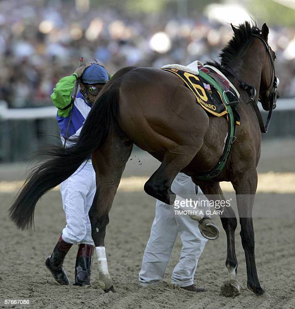 Jockey Edgar Prado stands by Kentucky Derby winner Barbaro after his horse injured his leg coming into the 1st turn at the 131st Preakness Stakes at...