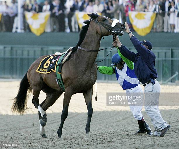 Ketucky Derby winner Barbaro is held by jockey Edgar Prado and a handler after the horse injured its right hind leg during the 131st Preakness Stakes...