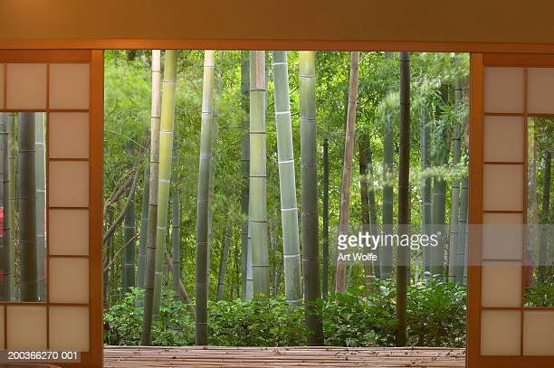 Bamboo as viewed through tea house windows, Kyoto, Honshu, Japan