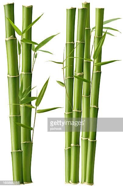 Belleza de bambú