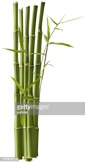 Bamboo Bunch with Leaves