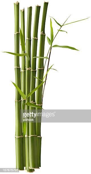 Bambus-Bündel mit Blätter