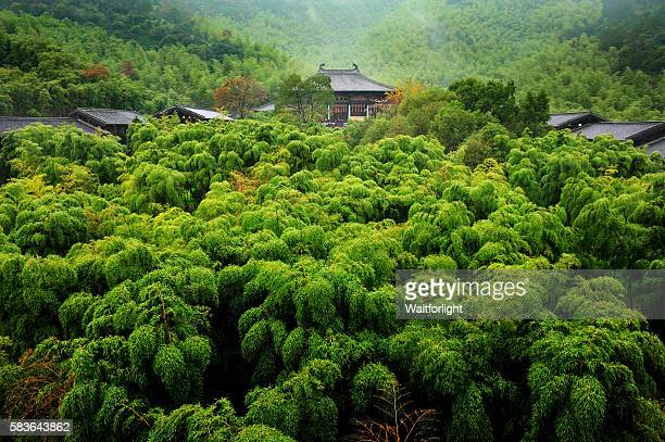 Bamboo forest and teahouse in Changxing,Zhejiang province,China.