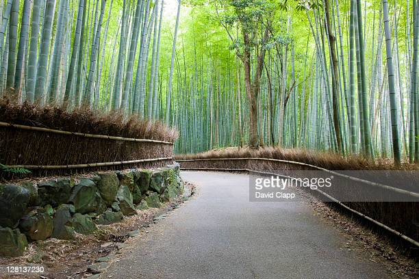 Bamboo forest in Arashiyama district, Kyoto, Japan