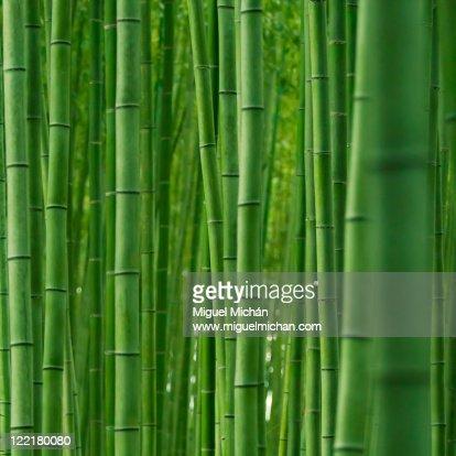 Bamboo forest in Arashiyama, Kyoto, Japan