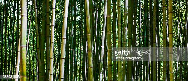 Bamboo forest in Damyang