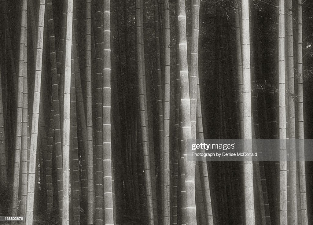 Bamboo forest in Kyoto, Japan : Stock Photo