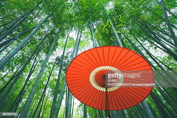 Bamboo forest, Kyoto Prefecture, Honshu, Japan