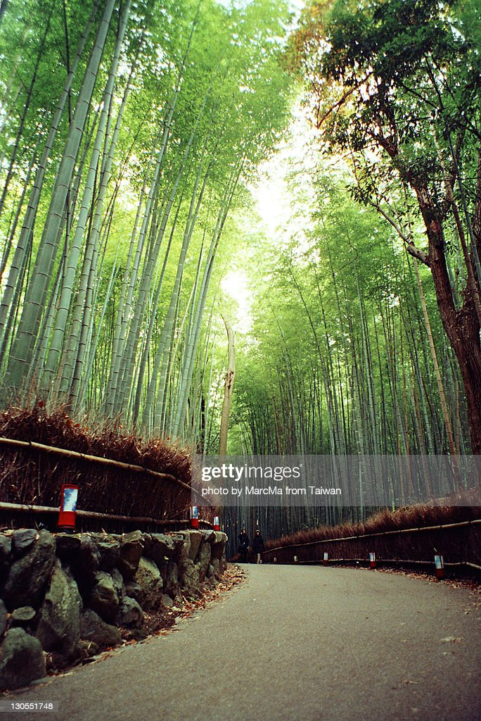 Bamboo forest : Stock Photo