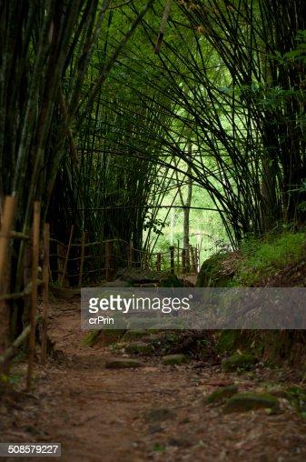 Bambus-Wald : Stock-Foto