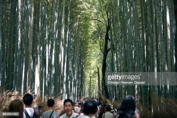 Bamboo forest with tourists near Kyoto