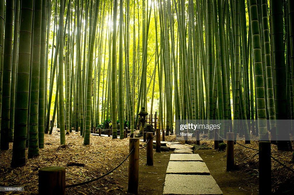 bamboo grove at Houkoku-ji temple : Stock Photo
