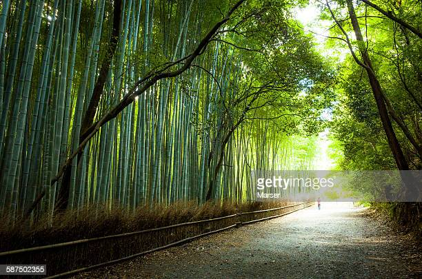 Bamboo grove in Arashiyama district
