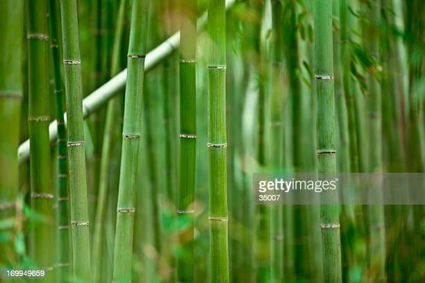 bosquet du bambou