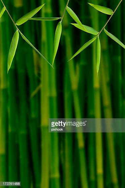 Bambus-Dschungel
