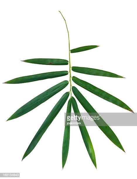 竹の葉と白クリッピングパス