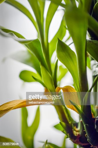 bamboo leaves close up : Stockfoto