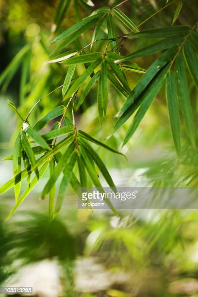 竹の葉水上