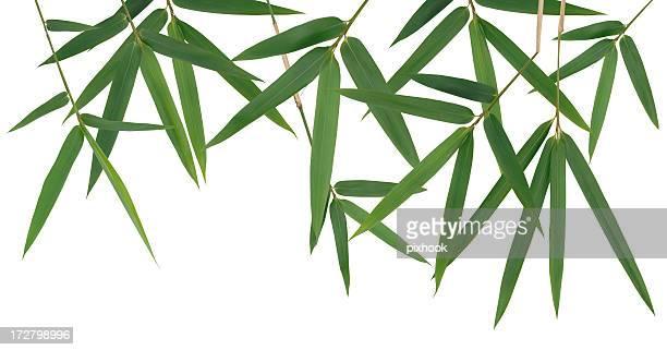 Bambus-Blätter