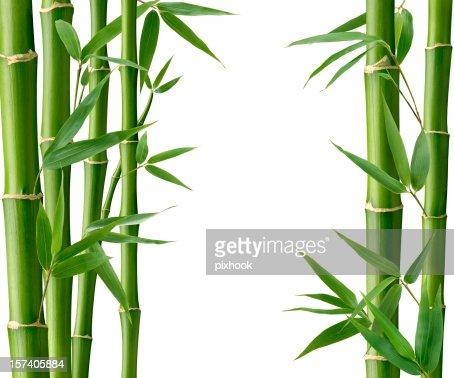 Bamboo Living