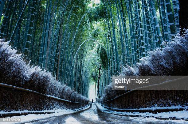Bamboo path covered with snow