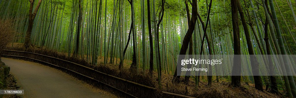 Bamboo Roadway : Stock Photo