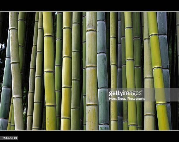Bamboo shapes