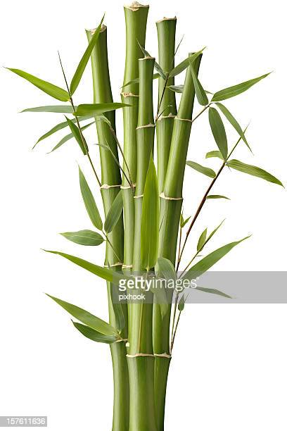 Bambus Wunderkerze