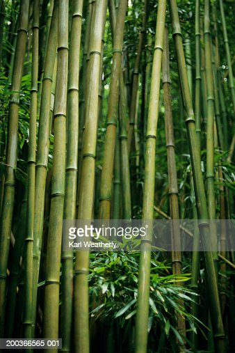 bamboo dating agency