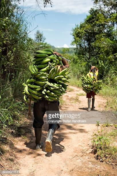 Banana carriers