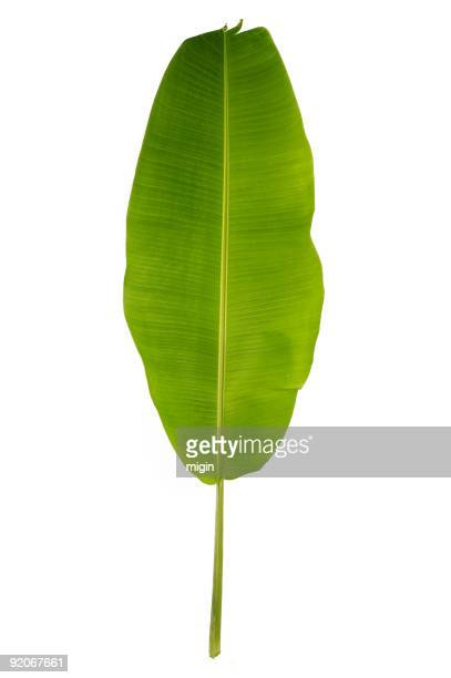 Banana Leaf, isoliert auf weiss