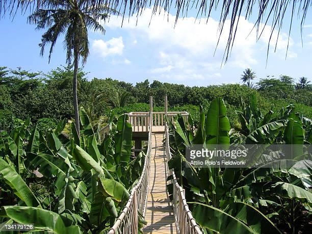 Banana plantation, Maldives