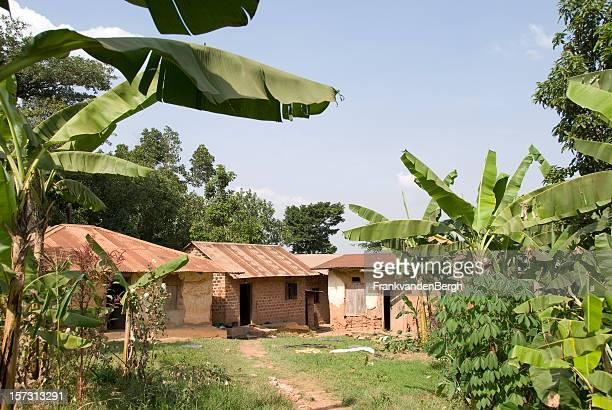 Bananen-Plantage
