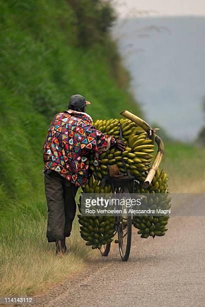 Banana Vendors on bicycle