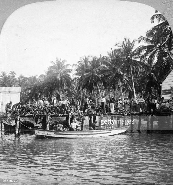 Banana wharf and coconut plantation Jamaica