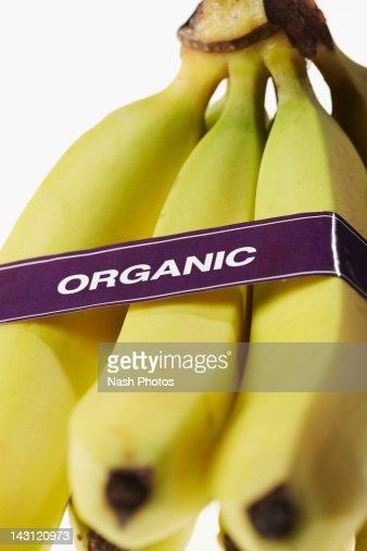Bananas labelled 'organic' : Stock Photo