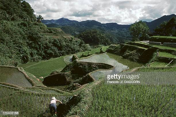 Banaue Philippines Rice paddies