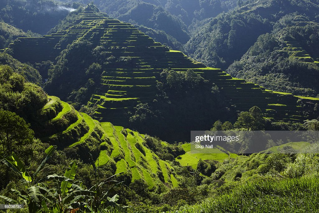 Banaue Rice Terraces : Stock Photo