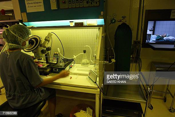 TO GO WITH STORY HEALTHTHAILANDTOURISMFERTILITY A Thai expert performs invitro fertilization at the Jetanin Institute in Bangkok 04 August 2006 For...