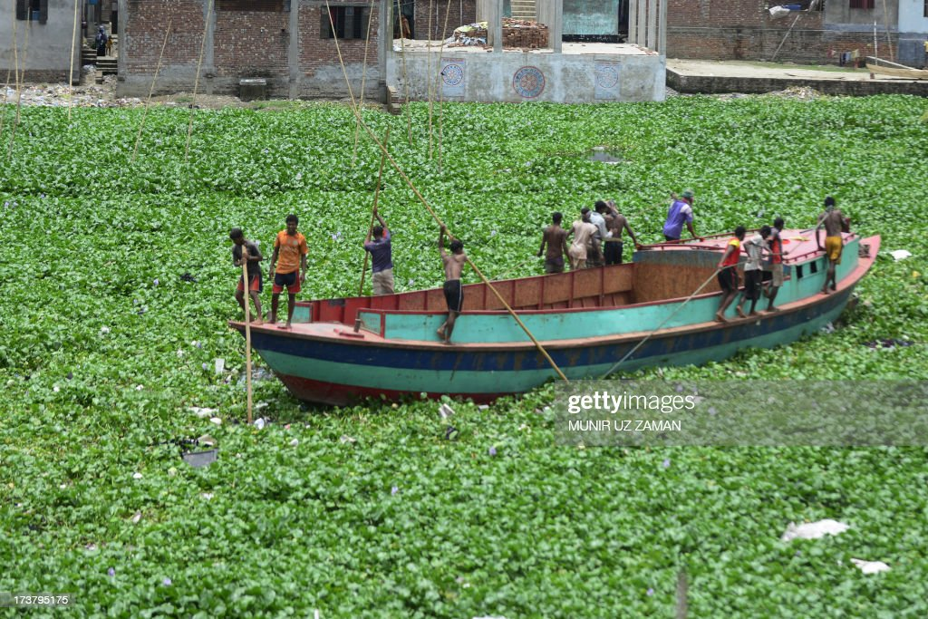 Bangladeshi boatmen maouver their vessel through water hyacinth during an ongoing nationwide strike called by the Bangladesh Jumaat-e-Islami in Dhaka on July 18, 2013. The strike has been called to protest the death sentence of the party's secretary general Ali Ahsan Mohammed Mujahid. A Bangladesh court has sentenced a leading Islamist politician to death for war crimes including murder, torture and kidnapping, as religious hardliners imposed a nationwide strike over the verdict. Ali Ahsan Mohammad Mujahid, 65, the second-highest ranked official of the country's largest Islamic party, was found guilty of five of seven charges by the much-criticised International Crimes Tribunal. AFP PHOTO/Munir uz ZAMAN