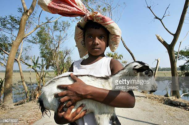 A Bangladeshi cycloneaffected boy holds his goat as he walks towards his makeshift shelter after receiving relief goods in Nishanbari village on the...